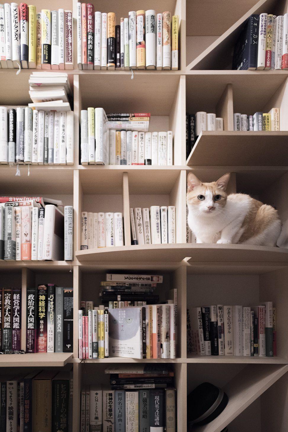 メンタリストdaigoさんの本棚(no 03) Margherita ご利用事例