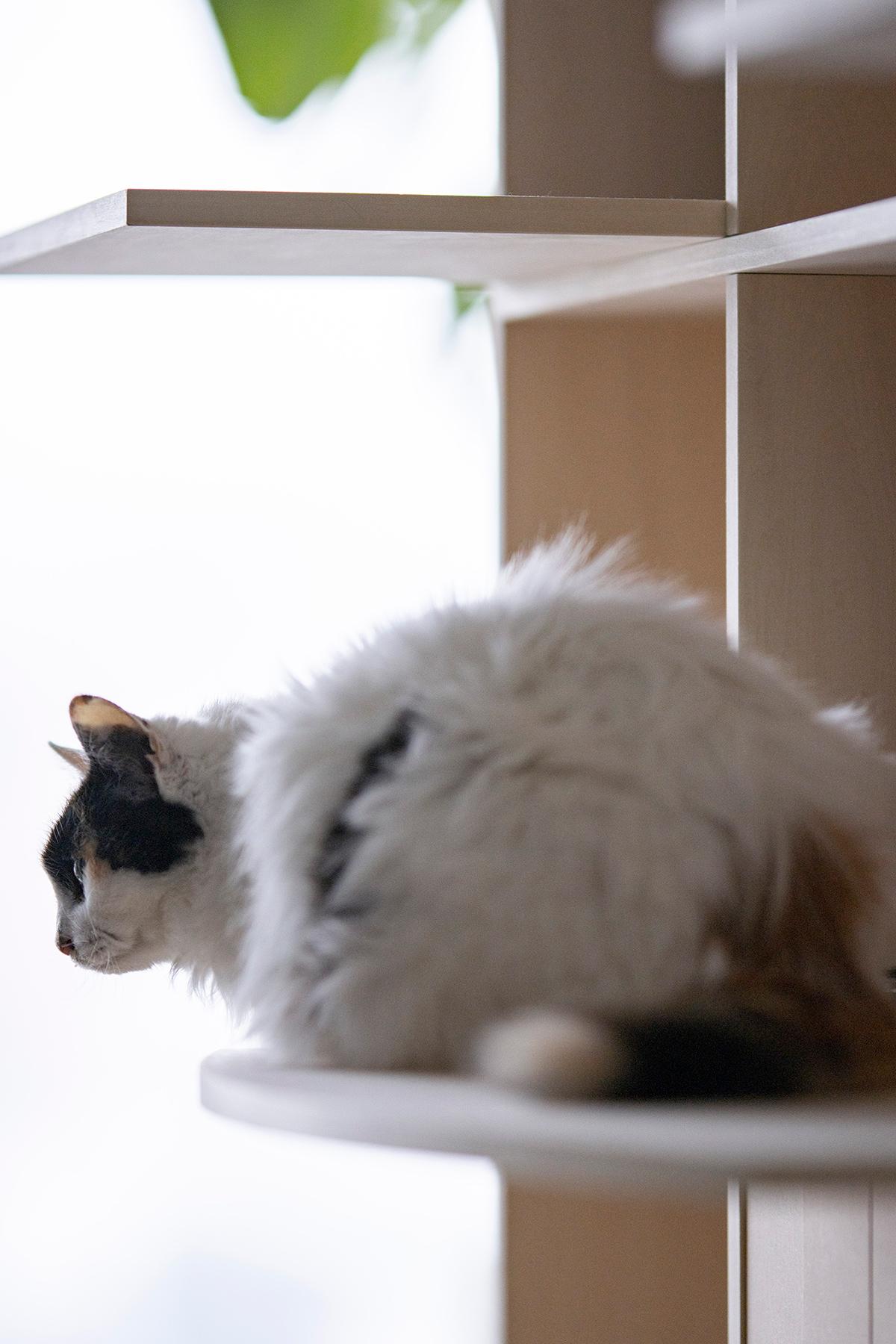 高層階で猫と共生する | 壁一面の本棚 奥行350mm / Shelf (No.119) | マルゲリータ使用例